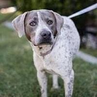 Odessa ID#18358845 – Female – Shelter Dog in Fresno