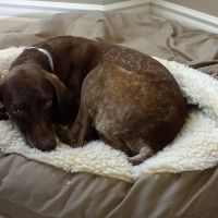 Jada – Our Foster Dog