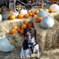 Rolf checks out the pumpkin patch!