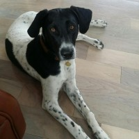 Zuma – Our Foster Dog