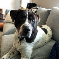 Mary – Our Foster Dog – Adopting Pending