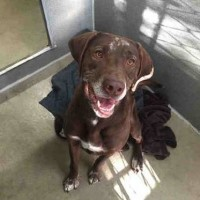 Angus-Male- Shelter Dog in Santa Rosa