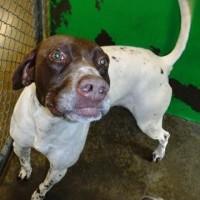 312839 – Male – Shelter Dog in Redding, CA