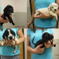 Puppies – Shelter Dogs in Oroville