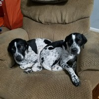 Thelma and Louise – Our Foster Dogs