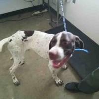 A074650 – Male – Capalar – Shelter Dog in San Martin, CA