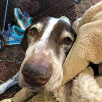 Juanna – Our Foster Dog
