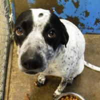 289097 – Female – Shelter Dog in Redding, CA