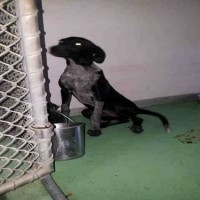 #A094404 – Female – Shelter Dog in Bakersfield