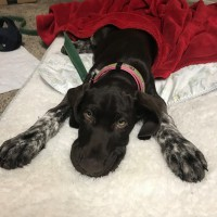 Pippa – Our Foster Dog
