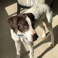 Guy – Our Foster Dog – Adoption Pending