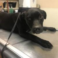 4 Female 1 Male Shelter Dogs in Modesto, CA