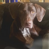 Boscoe – Our Foster Dog – Adoption Pending