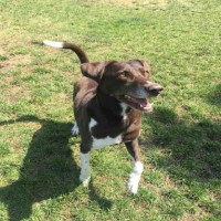 Charlie – Male – A024546 – Shelter Dogs in Oakdale