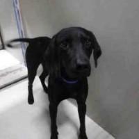 Jett – ID#A1102811 – Male – Shelter Dog in Bakersfield