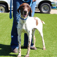 Peter- Male- Shelter Dog in Grass Valley