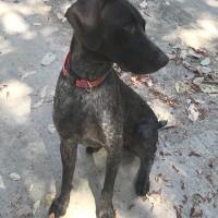 Ayden – Our Foster Dog