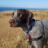 Leo – Our Foster Dog
