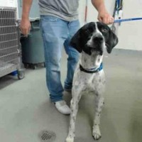 ID#A154806 – Male – Shelter Dog in Salinas, CA