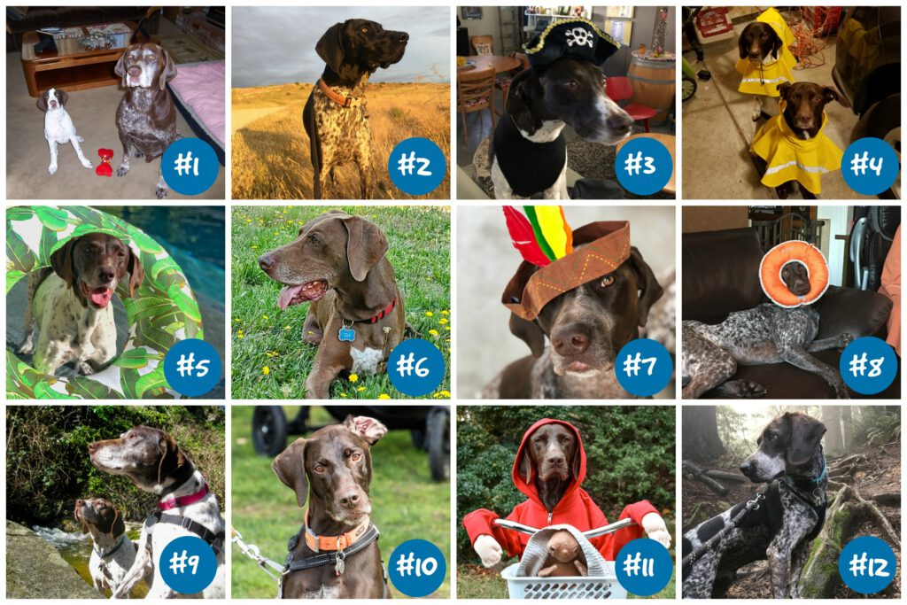 Collage of 12 dogs, winners for 2020 calendar