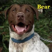 Bear – Courtesy Posting