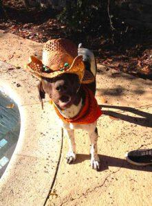 Mr. Buddy Bear in a cowboy hat and bandana