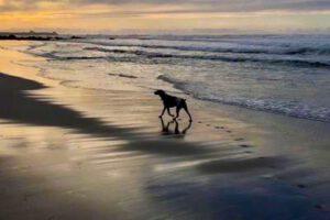 Mr. Buddy Bear enjoying sunset on the beach