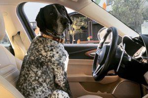 Murphy Driving